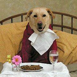 Сніданок допомагає мозку собак краще працювати