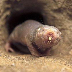 Землекопи розкриють секрет довголіття і відмінного здоров`я
