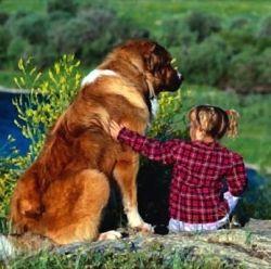 Тварина в домі - гарантія того, що дитина виросте доброю
